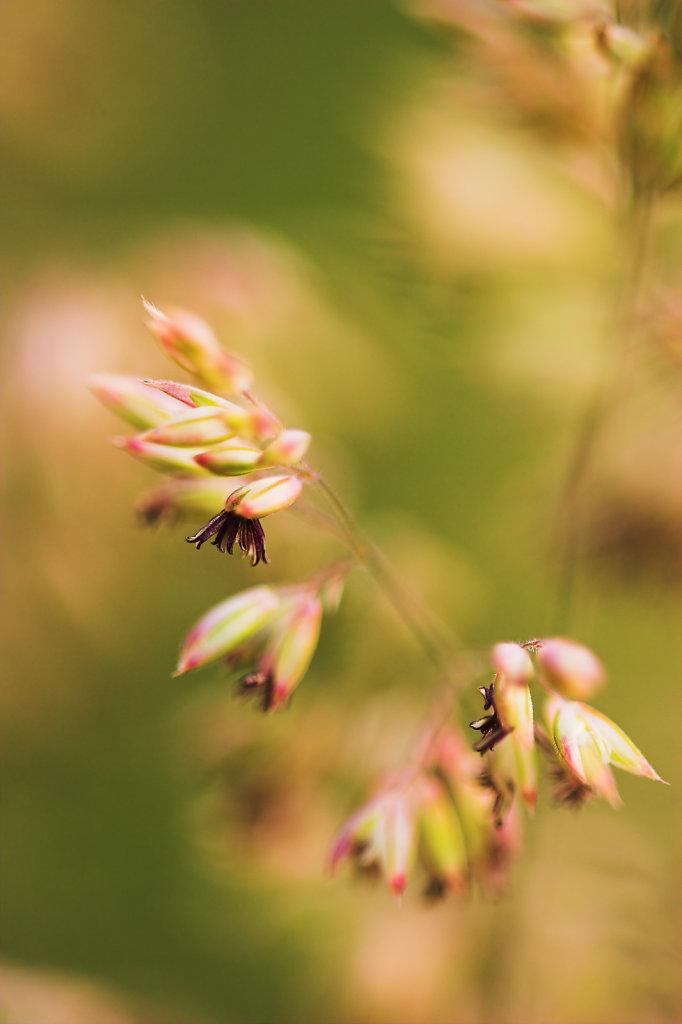 Gras van dichtbij
