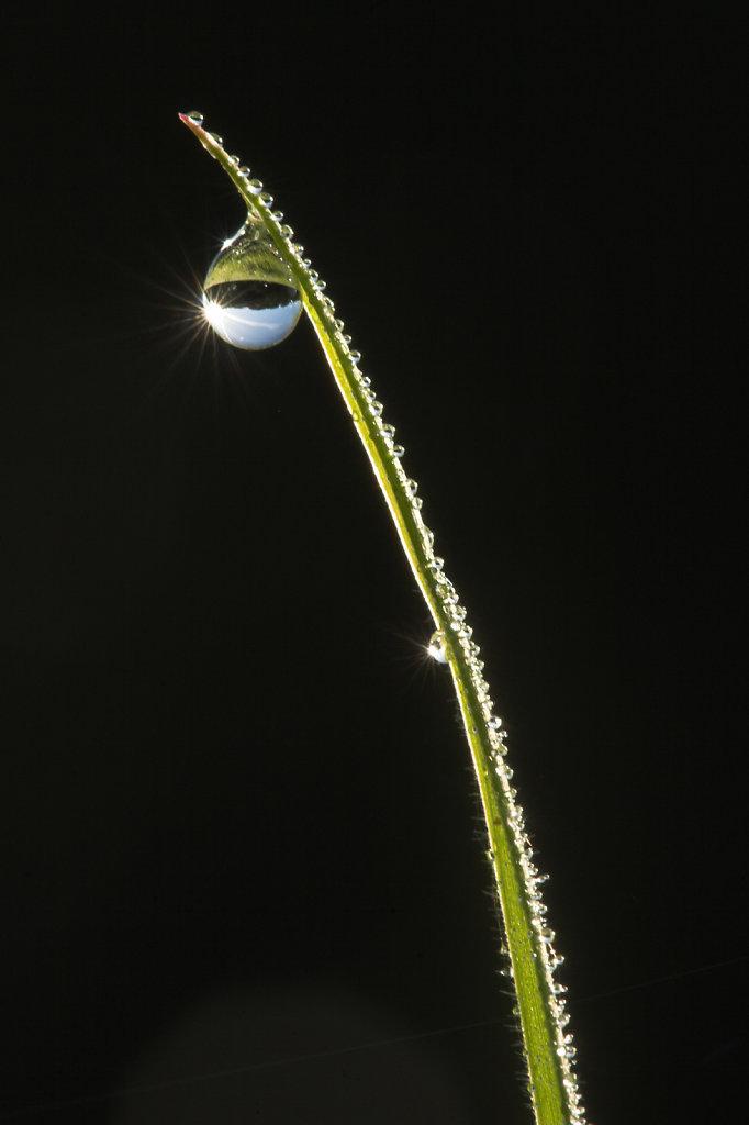 Druppel juweeltje